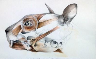 """""""Kattehoved"""" – 2001 - blyant og akvarel på papir - 16 x 30 cm - Akvarel af Pernille Helleskov Pedersen"""